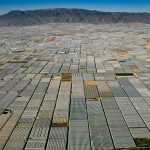 almeria-greenhouses
