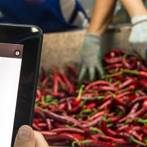 inventia-agrarica-cultiva-app