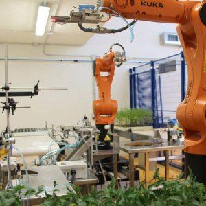 Sistemas robóticos para semilleros, injertos