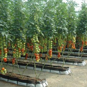 produccion agricola sostenible